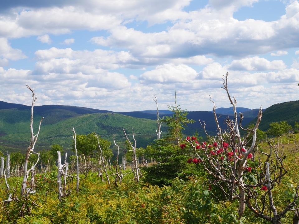 Mont Ernest-Laforce en Gaspésie - Roadtrip au Québec - Blog Voyage Ma Folie Vagabonde