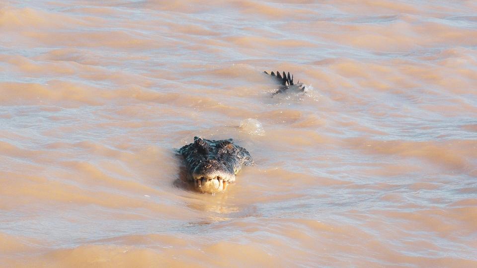 Crocodile à Adelaide River, Australia - PVT Australie : de Perth à Darwin - Blog Voyage Ma Folie Vagabonde