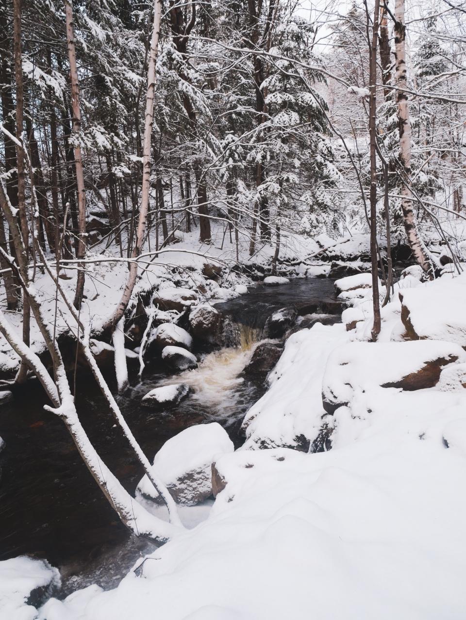 Forêt de Mont-Tremblant enneigée - L'Hiver à Montréal, Canada - Blog Voyage Ma Folie Vagabonde