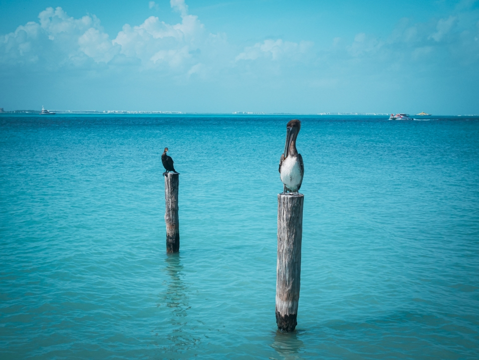 Oiseaux sur Isla Mujeres - Roadtrip 10 jours au Mexique - Blog Voyage Ma Folie Vagabonde